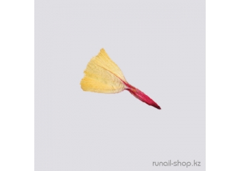 Сухоцветы для наращивания ногтей (желтый)