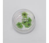 Сухоцветы для ногтей (зеленый)