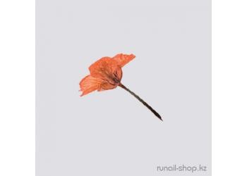 Сухоцветы для маникюра (коричнево-рыжий)